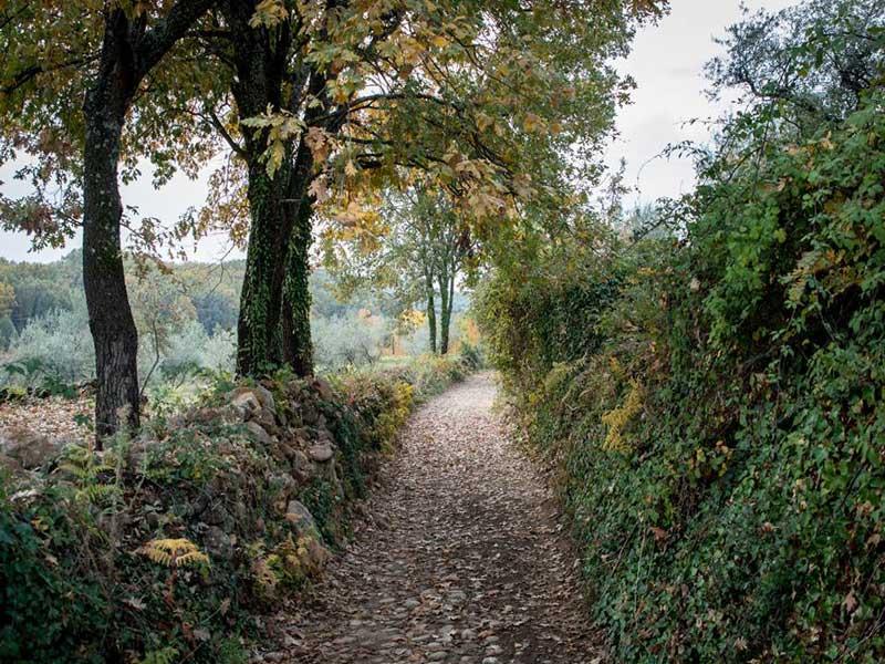 Rutas a pie: disfruta de hacer senderismo desde las Cabañas de la Vera