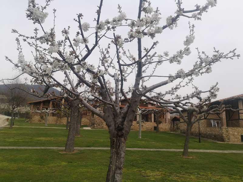 Casas rurales Cácersen primavera